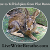 How to Tell Subplots From Plot Bunnies