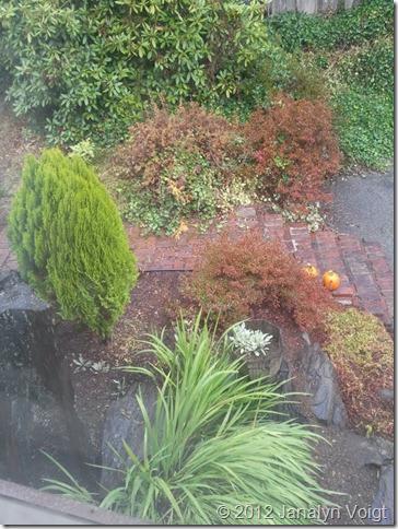 My Front Garden